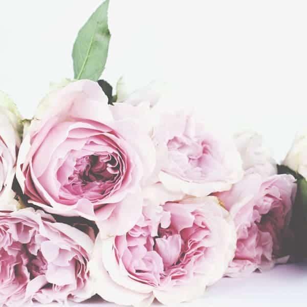 Schoonheidssalon Duiven Petra Barthen Professional Skincare | Vierkant rozen